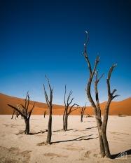 acacia dead trees deadvlei sossusvlei namibia photography roaming ralph
