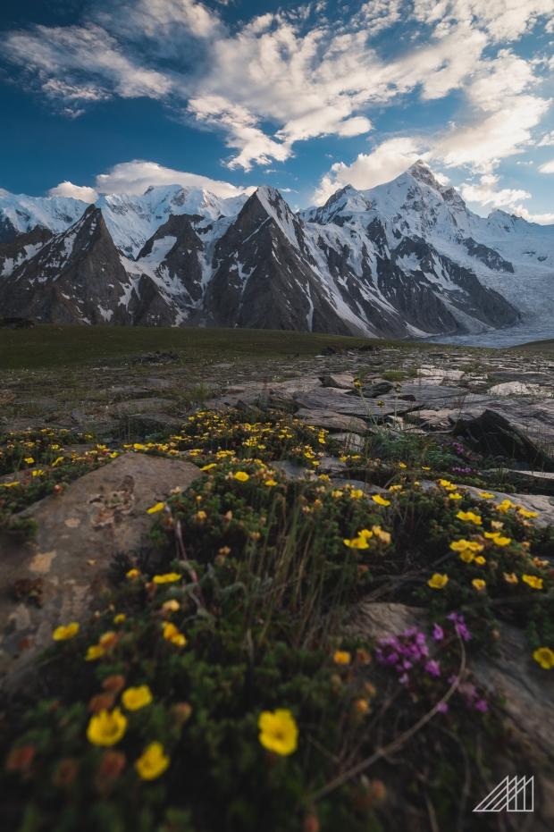 shispar peak and flowers paksitan