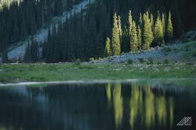 tree-reflections